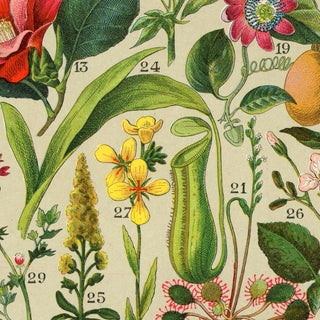 Antique 'Spanish Botanical' Wall Hanging Preview