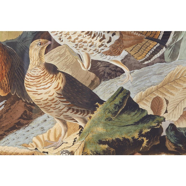 American Audubon Ruffed Groüse Plate #41 Havell Edition For Sale - Image 3 of 12