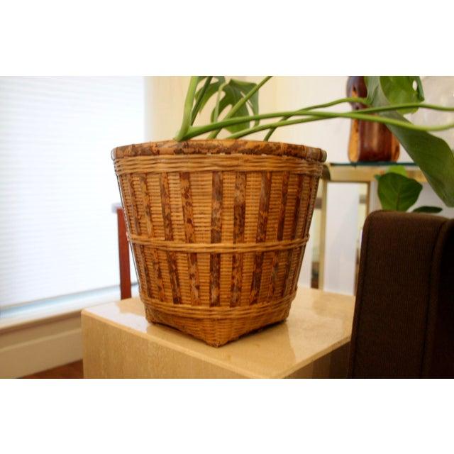 Organic Modern Rattan Planter Basket For Sale In Dallas - Image 6 of 8