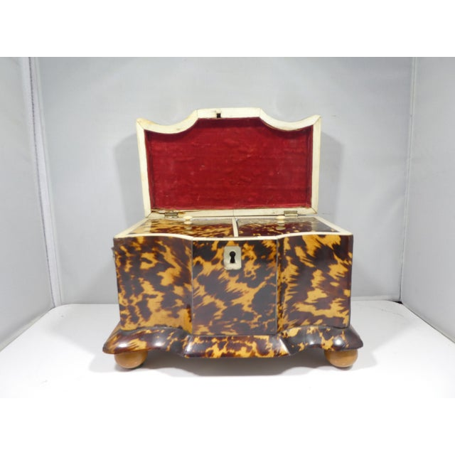 19th Century Tortoise Shell Tea Caddy For Sale - Image 12 of 13