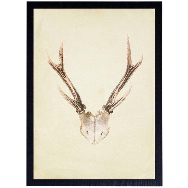 """Vertical Antlers - 17"""" X 23"""" For Sale"""