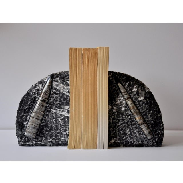 This is a pair of beautiful vintage Orthoceras bookends. A perfect modern piece to subtly decorate that bookshelf. It's...