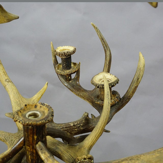 Late 19th Century Antique Black Forest Antler Candle Luster 1900 For Sale - Image 5 of 13