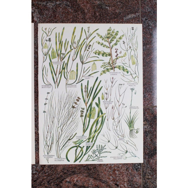 This is a lovely pair of vintage botanical wheat prints pulled from a 1960s book. Text is on the back of each print. The...