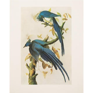 1960s Cottage Style Lithograph of a Columbia Jay by John James Audubon