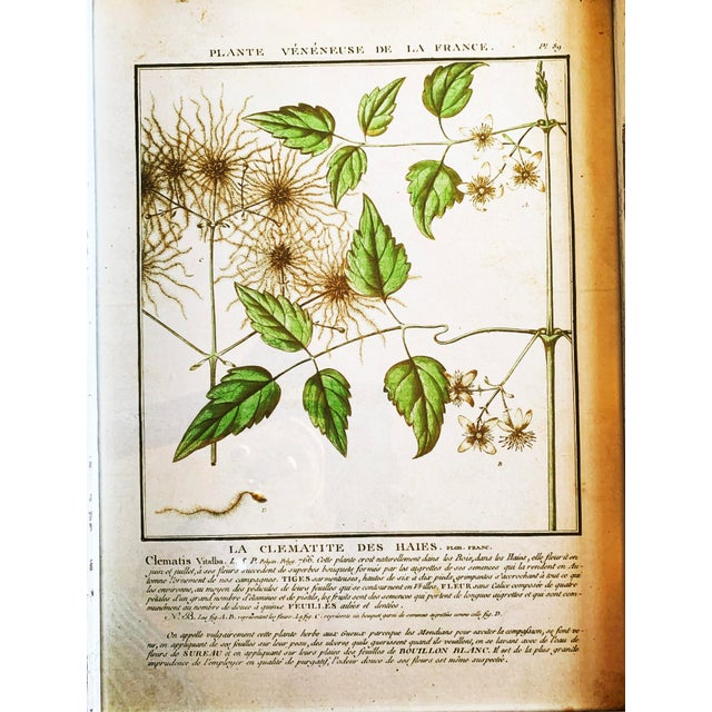 Vintage Framed French Botanical Prints Reproductions - Set of 4 For Sale - Image 9 of 13