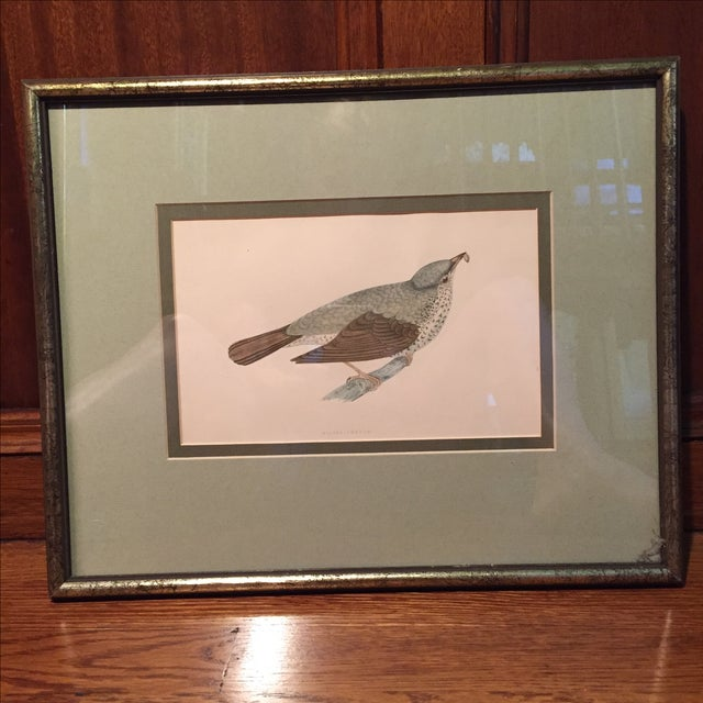 18th C. English Bird Prints in Matching Frames - Image 8 of 12