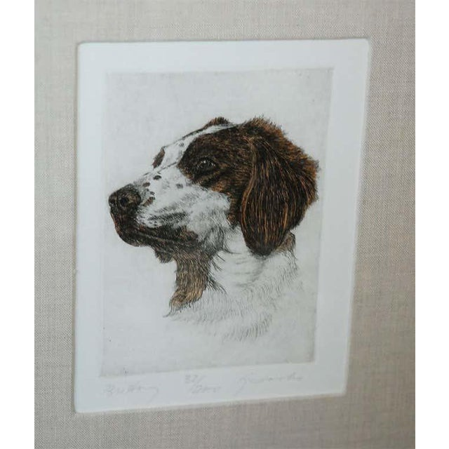 Late 20th Century Colored Etching of Whippet Hunting Dog For Sale - Image 5 of 8