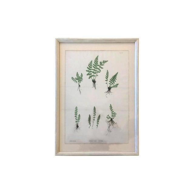 19th Century Bradbury & Evans Nature Printed Fern Print For Sale In Boston - Image 6 of 6