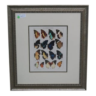 Traditional Silver Framed Butterfly Print For Sale