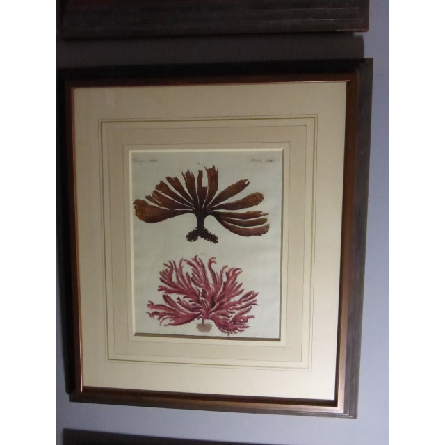 Antique Framed Nautical Engravings - Set of 6 - Image 8 of 8
