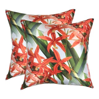 Orchid Harpophylla Pillows - a Pair For Sale