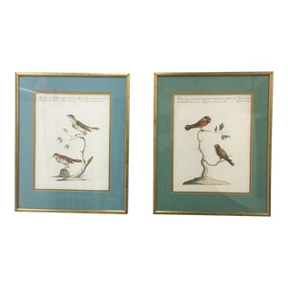 19th Century Italian Color Lithographs of Birds- A Pair For Sale