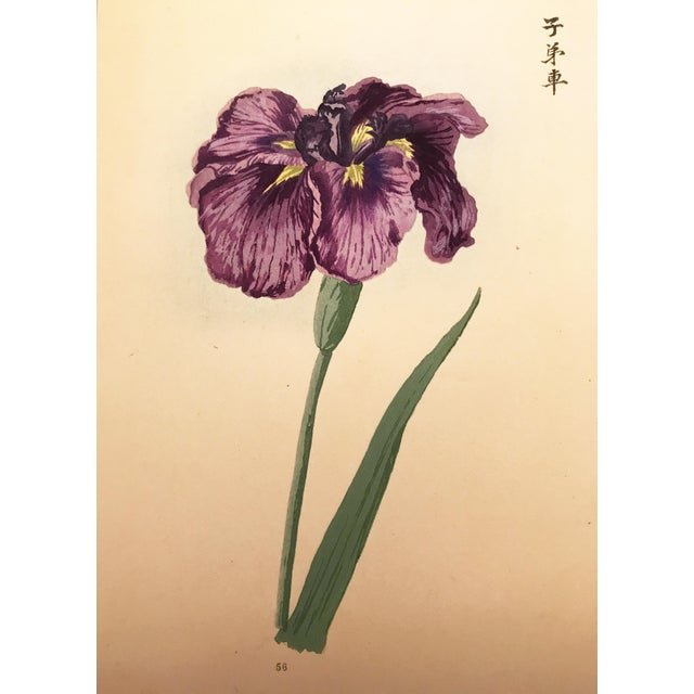 Asian Japanese Iris Woodblock Botanical Print C.1900 For Sale - Image 3 of 6
