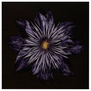 Carsten Witte - Clematis - Edition 2/5, Signed, 2013 For Sale