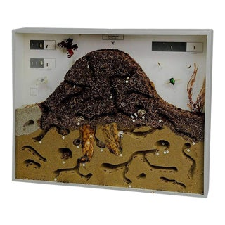 School Teaching Display Anthill of the Red Wood Ant For Sale