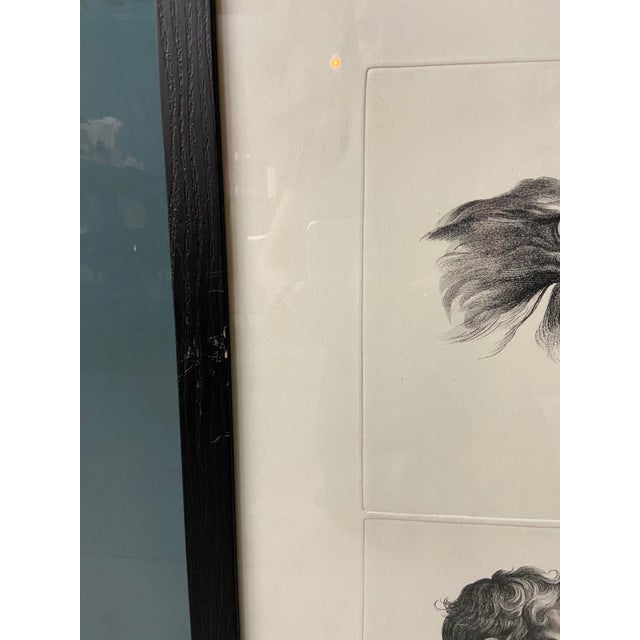 Wood Man as Eagle - Physiognomic Heads Series Framed Illustration by Charles Le Brun For Sale - Image 7 of 12