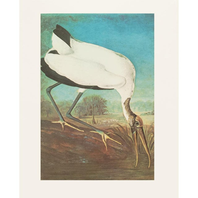 A stunning vintage Cottage Style reproduction of the original lithographic print of Wood Ibis by John James Audubon. Comes...
