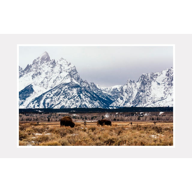 "Cabin ""Buffalo in the Tetons"" Original Framed Photograph For Sale - Image 3 of 3"