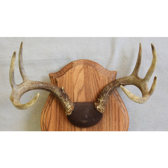Beautifully mounted antler trophy rack on wood plaque. No maker's mark. Minor scuffs, wear.