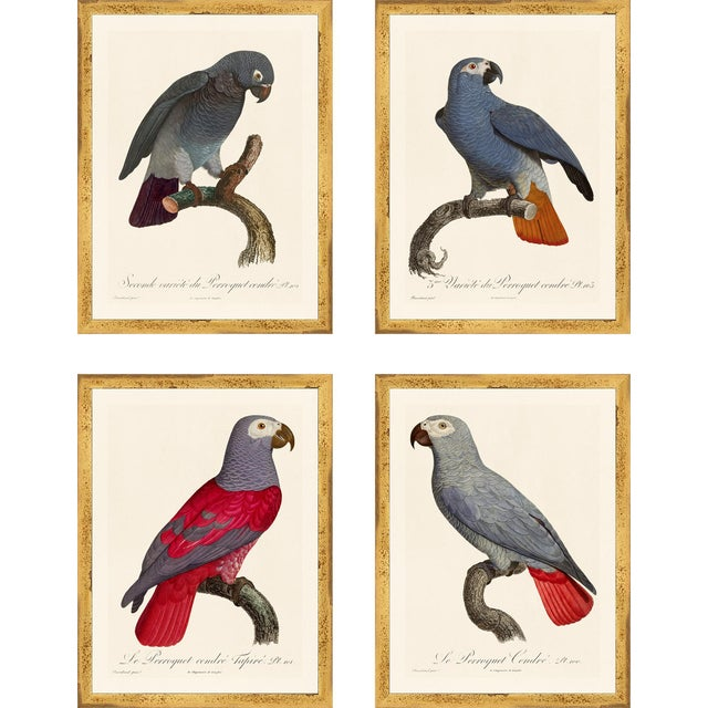 Jacques Barraband Grey Parrots Framed - Set of 4 For Sale - Image 12 of 12