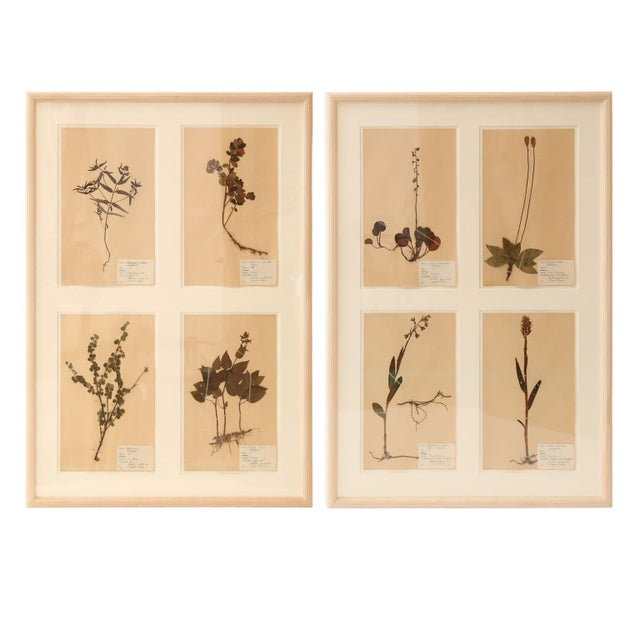 Framed Set of Four Herbaria For Sale - Image 12 of 12