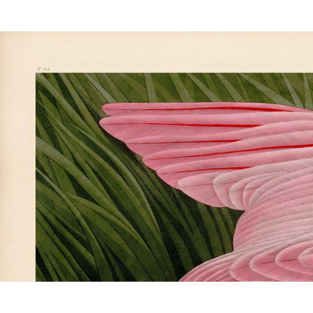 Audubon Roseate Spoonbill Giclee Print For Sale In Atlanta - Image 6 of 8