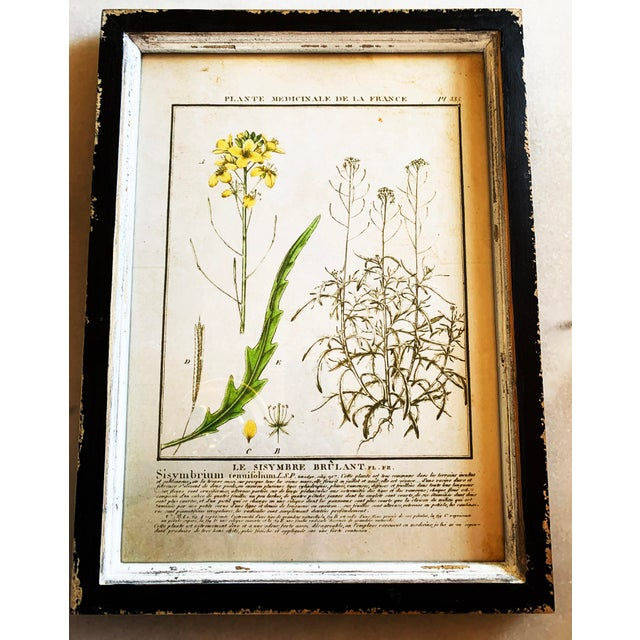 Farmhouse Vintage Framed French Botanical Prints Reproductions - Set of 4 For Sale - Image 3 of 13