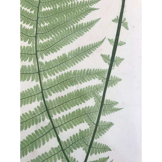 Arts & Crafts 19th Century Bradbury and Evans Nature Printed Fern Print For Sale - Image 3 of 6