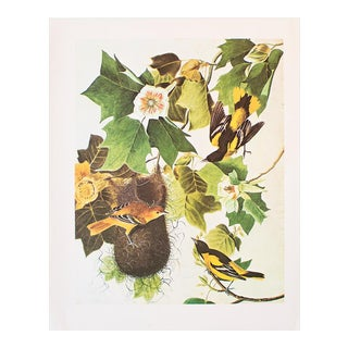 1966 Vintage Cottage Lithograph of Baltimore Oriole by John James Audubon For Sale