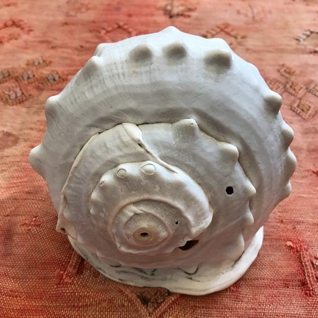 Queen Helmet Conch Seashell - Image 5 of 9