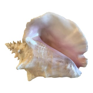 Natural Pink Conch Shell