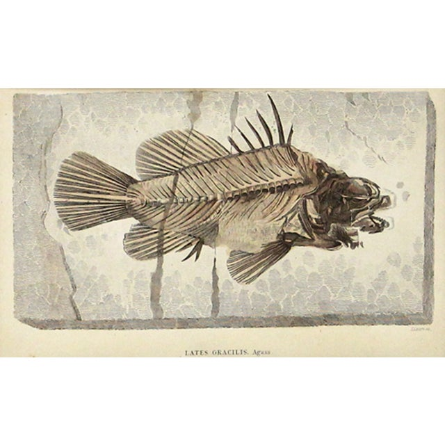 Traditional Antique Fossilized Fish Print For Sale - Image 3 of 3