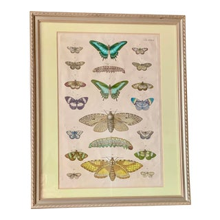 Framed Antique 18th Century Handpainted Butterfly Engraving From Sir Albertus Seba's Cabinet of Natural Curiosities For Sale