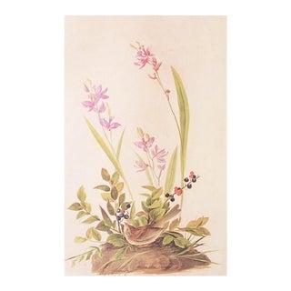 Field Sparrow by John James Audubon, Vintage Cottage Print For Sale