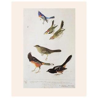 "1966 ""Birds of America"" by John James Audubon Vintage Cottage Print For Sale"