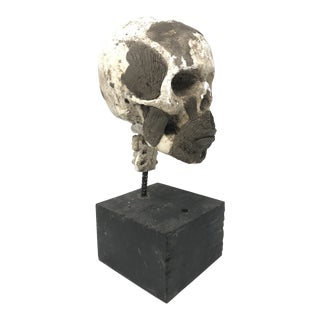 Vintage Artist's Plaster Skull Model for Clay Modeling For Sale
