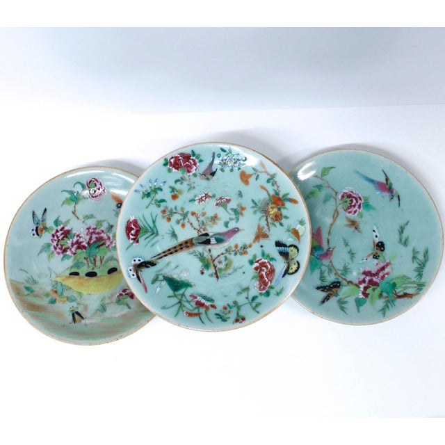 19th Chinese Export Rose Canton Celadon Porcelain Plates - Set of 3 For Sale - Image 12 of 12