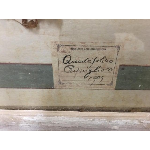 Vintage Italian Framed Botanical Herbarium Wall Hanging For Sale In Austin - Image 6 of 12
