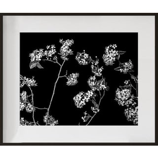 """Bradford Pear"", Contemporary Photograph by Jean Karotkin, Framed For Sale"