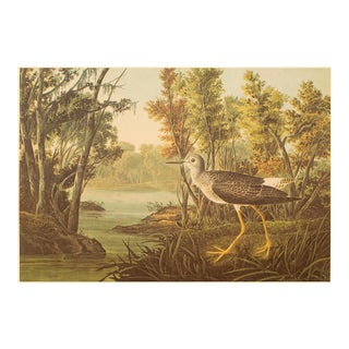 Yellowshank by John J. Audubon, XL Vintage Cottage Print For Sale