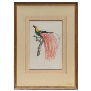 "Vintage Mid-Century Jacques Barraband ""Le Petit Paradis Emeraude"" Hand-Colored Restrike Engraving For Sale"