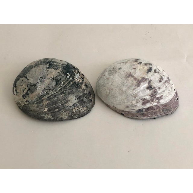 Boho Chic Black & White Abalone Shells - Set of 2 For Sale - Image 3 of 7