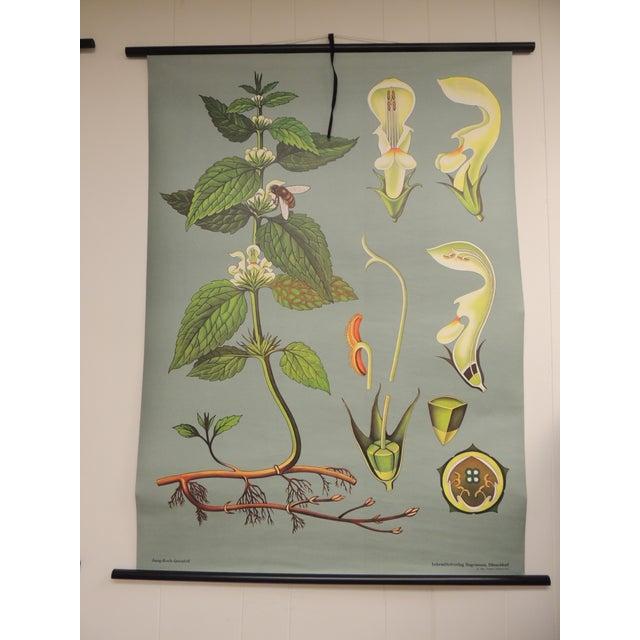 "Vintage Botanical Print ""White Deadnettle"" by Hagemann, Germany, 1975 - Image 6 of 6"