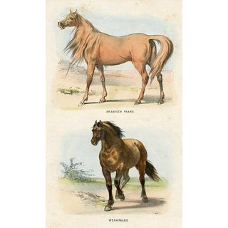 1860s Dutch Horse Lithograph For Sale