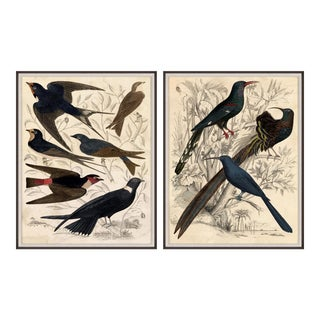 Gallivani Birds, Set Of 2, Framed Artwork For Sale