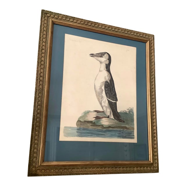 18th Century Antique Original Peter Mozell Engraving by T Pennant For Sale
