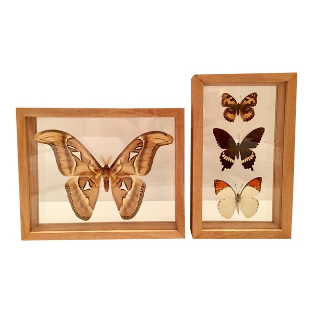 Shadow Box Framed Butterflies - A Pair - Image 1 of 7