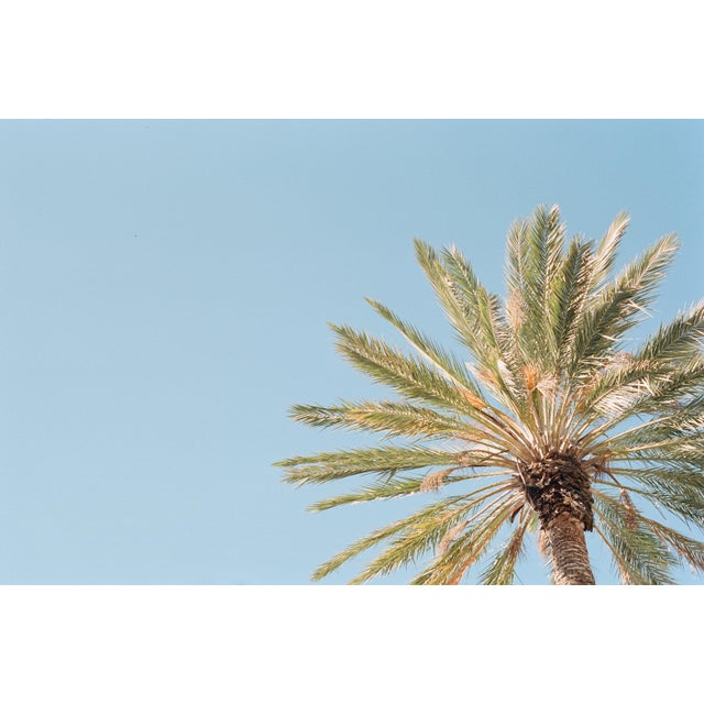 That corner office with a corner view of Palm Trees breaching the skyline. 16x24 Photographic Print
