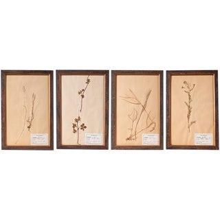 Framed Pressed Botanicals - Set of 3